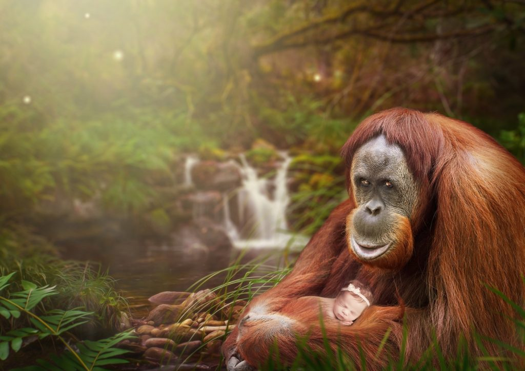 5 Facts You Probably Don't Know About Orangutans